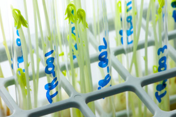 agricultural-biotechnology