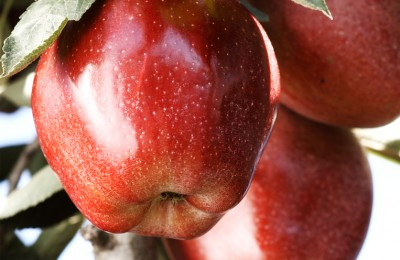 apples_fruit_001
