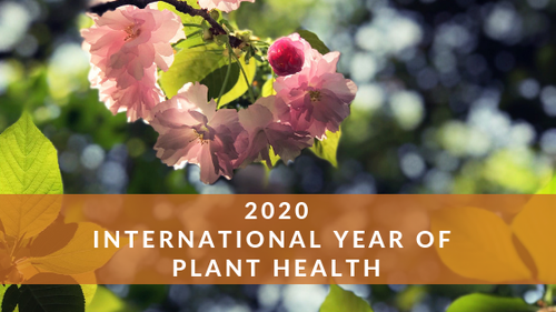international_year_of_plant_health_(1)-500x0