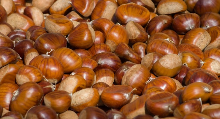 chestnuts-3727959_1280
